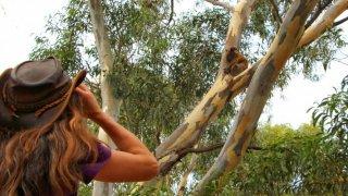 Janine Duffy with koalas