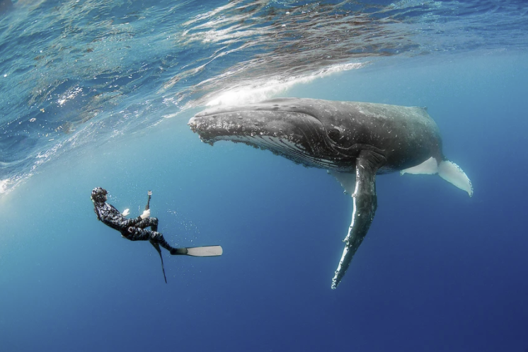 swim with whales
